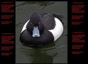 angry-duck-ransowmare-sensorstechforum